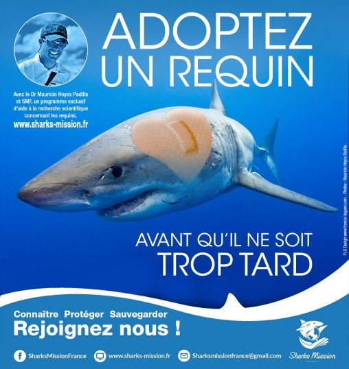 Affiche-adopter-un-requin