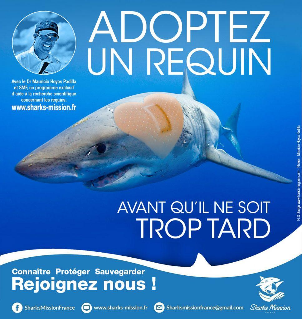 adopt a shark francis le guen content creator web designer poster adopt a shark affiche2