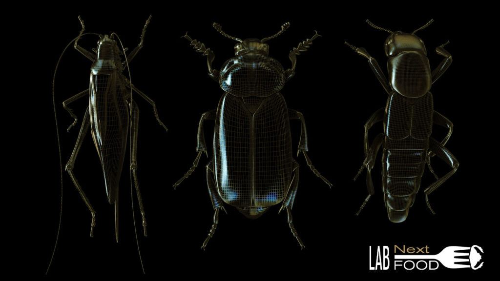 nextfood-insectes-3D-Xrays